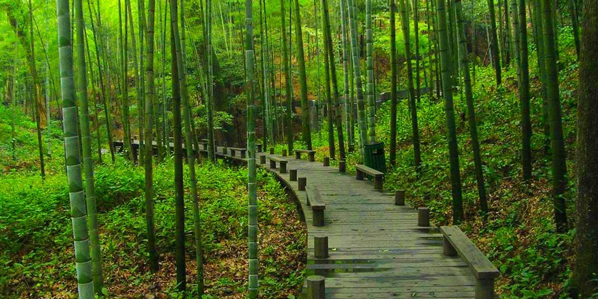 良渚文化村·山地公园图片
